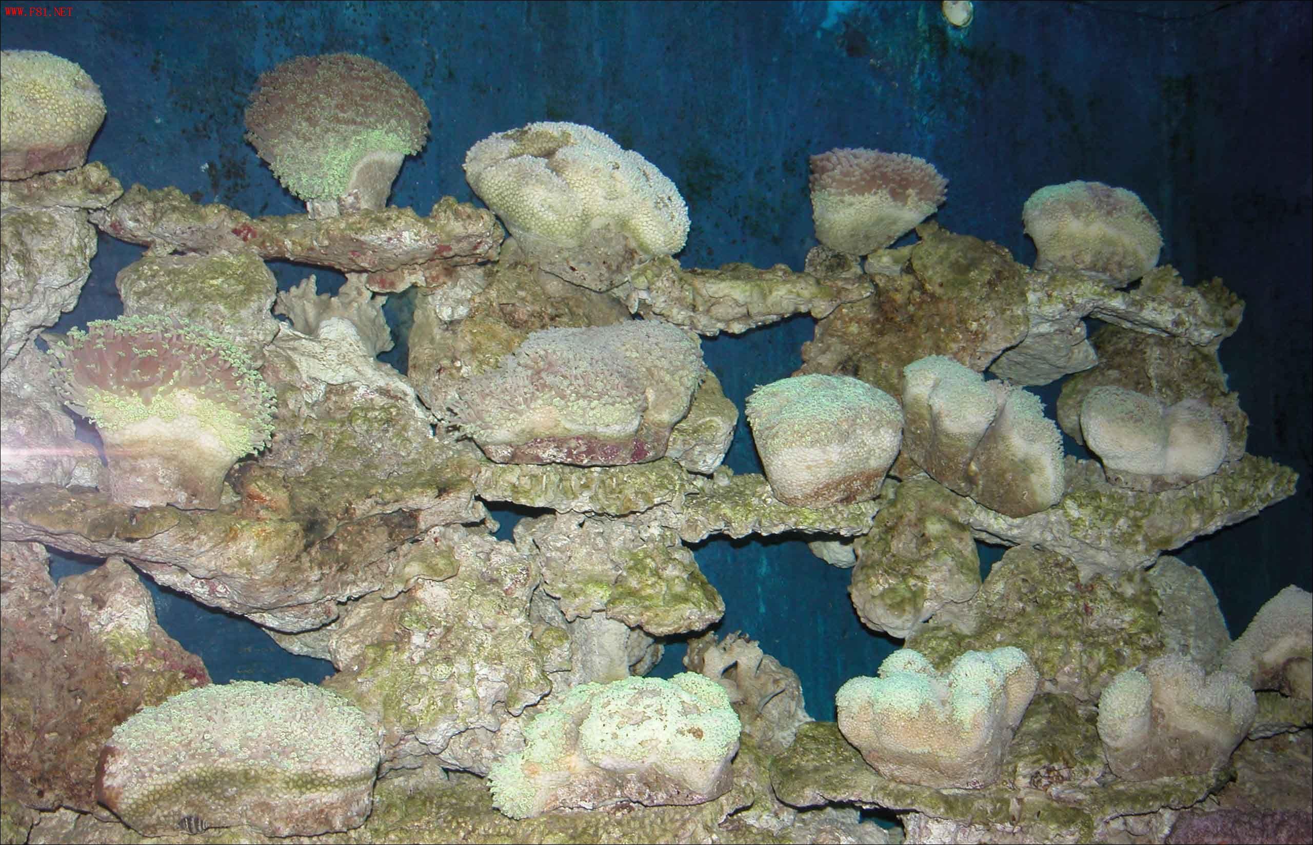 壁纸 海底 海底世界 海洋馆 水族馆 2560_1648